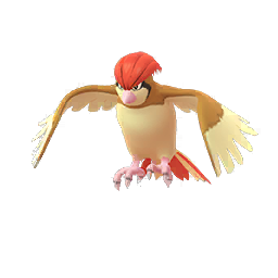 Buy Pokémon Pidgeotto
