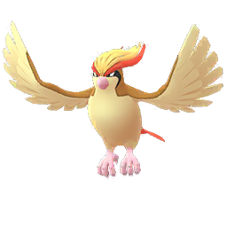 Buy Pokémon Pidgeot