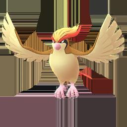 Pokémon kaufen Pidgeot